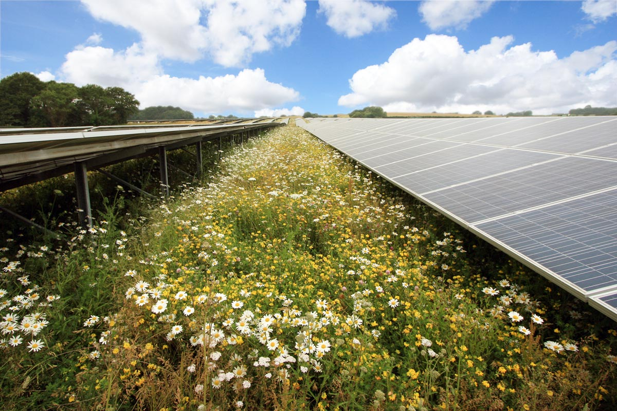 Solar Farm Cleaning & Maintenance