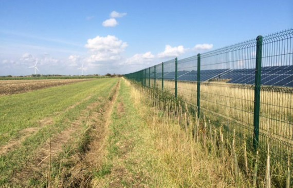 Solar Farm Hedge Planting, mixed native hedgerow, Isle of Sheppey