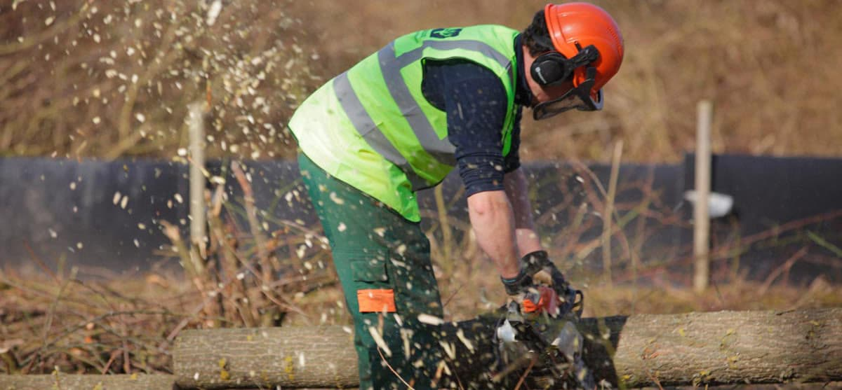 Tree Services available from Twig Group