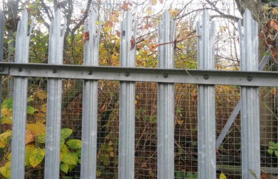 Japanese Knotweed Control for Kent County Council