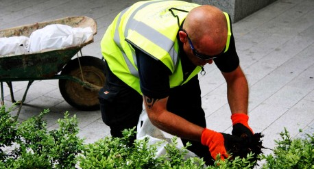 Mulching - Grounds maintenance at St Barts Hospital, London