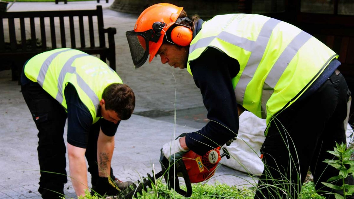 Hedge trimming - Grounds maintenance at St Barts Hospital, London