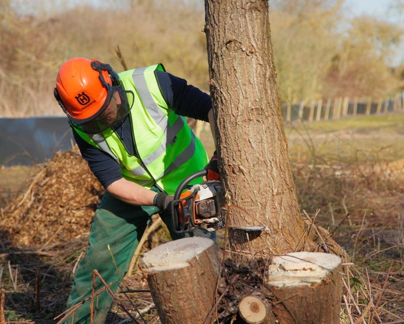 Tree felling at Leybourne Lakes, Burham