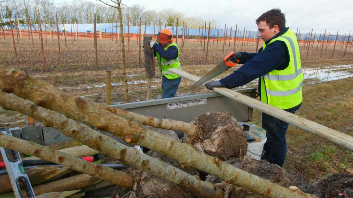 Tree & hedge planting for Belectric Solar Farm