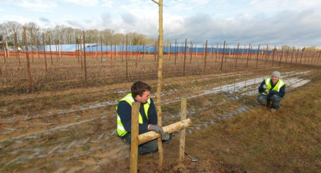 Checking tree installation - Belectric solar farm at Paddock Wood