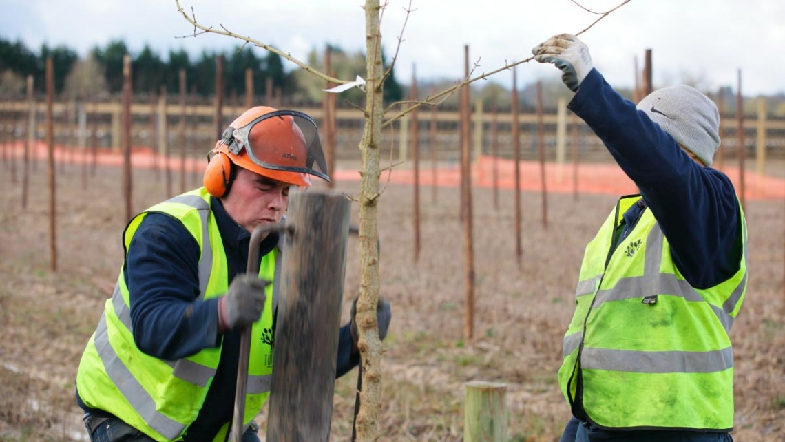 Tree Planting Services from Twig Group