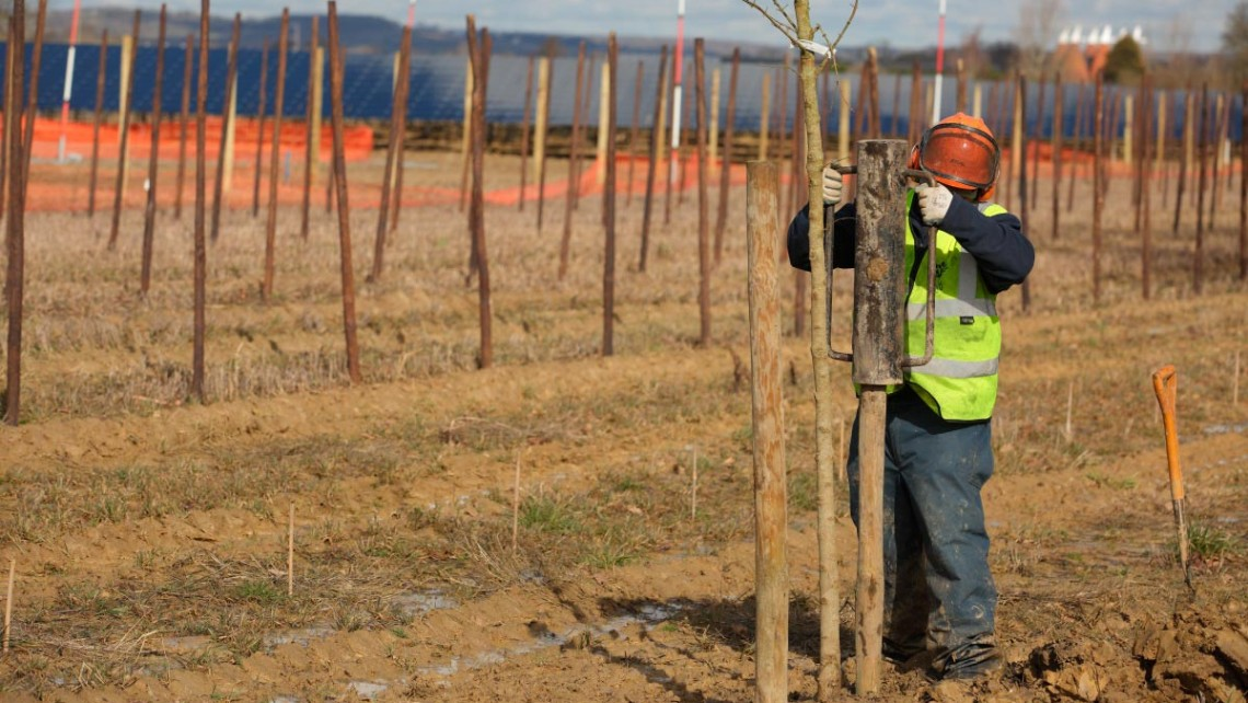 Tree planting project at Belectric solar installation at Paddock Wood