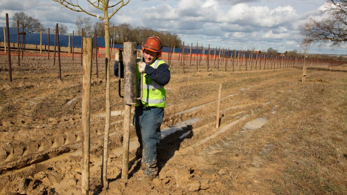 Tree planting for Belectric solar installation at Paddock Wood