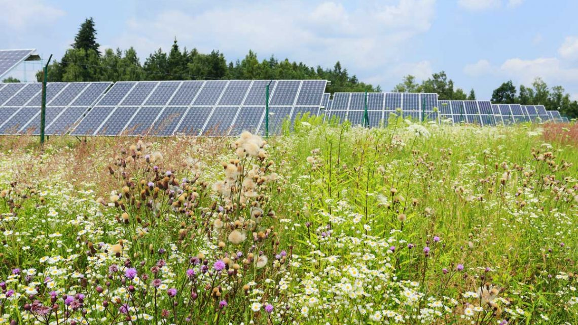 Solar Farms Biodiversity - Twig Group