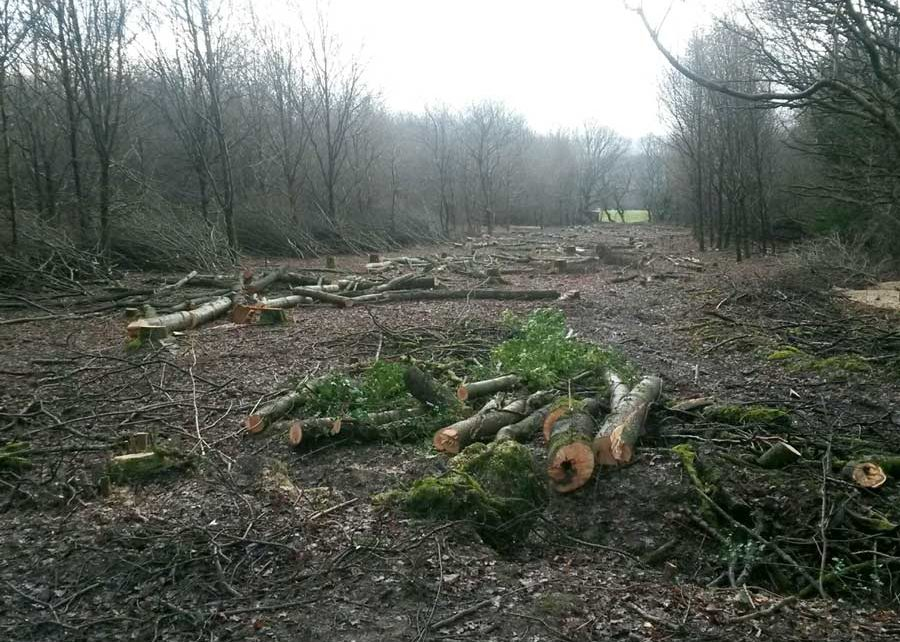 Sensitive Vegetation Clearance & Reptile Mitigation for Clancy Docwra